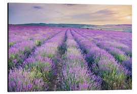 Alluminio Dibond  Meadow of lavender on sunset