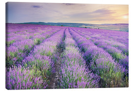 Stampa su tela  Meadow of lavender on sunset