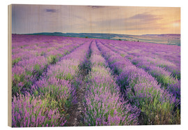 Legno  Meadow of lavender on sunset