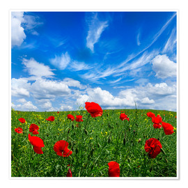 Poster Premium Red poppies on green field