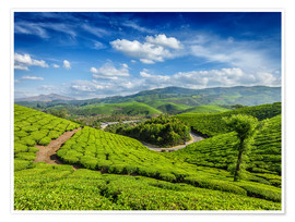 Poster Premium  Green tea plantations in morning