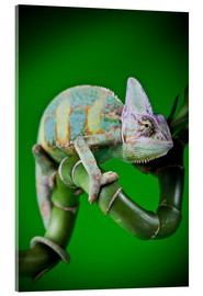 Vetro acrilico  green chameleon on bamboo