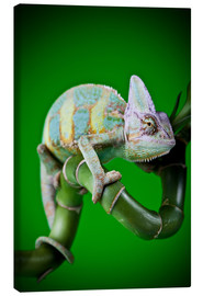 Stampa su tela  green chameleon on bamboo