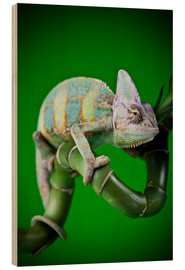 Stampa su legno  green chameleon on bamboo