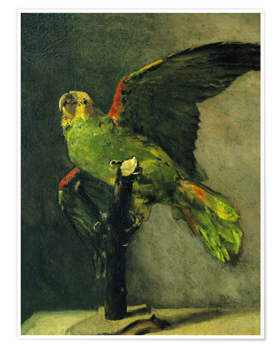 Poster Premium The green parrot