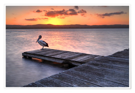Poster Premium  A pelican resting on the lake Tuggerah