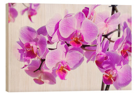 Stampa su legno  Beautiful pink-magenta orchid