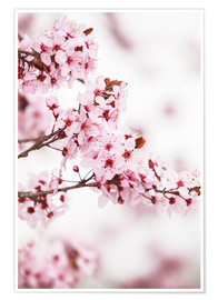 Poster Premium  flowering fruit tree