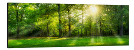 Alluminio Dibond  Forest panorama with sunbeams in summer - Jan Christopher Becke