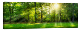 Tela  Forest panorama with sunbeams in summer - Jan Christopher Becke