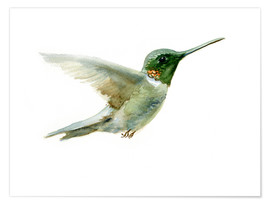 Poster Premium  Hummingbird - Verbrugge Watercolor