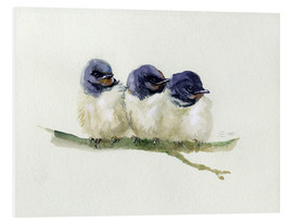 Stampa su schiuma dura  3 little swallows - Verbrugge Watercolor
