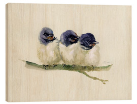 Stampa su legno  3 little swallows - Verbrugge Watercolor