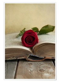 Poster Premium Red rose and old open book