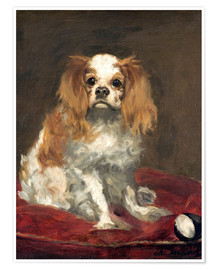 Poster Premium A King Charles Spaniel