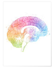 Poster Premium  Brain Anatomy - Mod Pop Deco