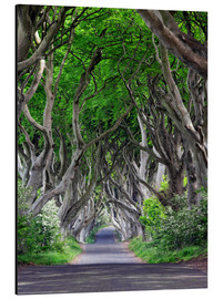 Stampa su alluminio  The Dark Hedges in Irlanda - Dieter Meyrl