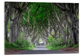 Vetro acrilico  Dark Hedges in Ireland - Dieter Meyrl