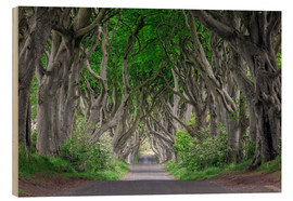 Stampa su legno  Dark Hedges in Ireland - Dieter Meyrl