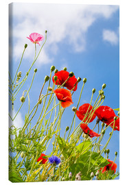 Stampa su tela  Poppies into the sky - Edith Albuschat