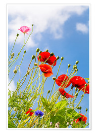 Poster Premium Poppies into the sky
