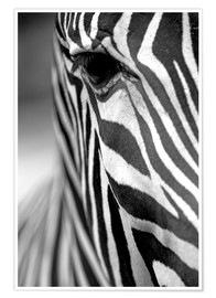 Poster  face of a Grevy's zebra
