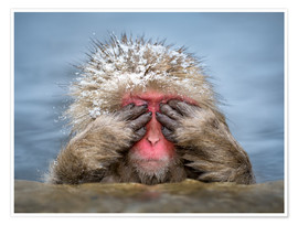 Poster Premium  Japanese snow monkey in Jigokudani Monkey Park while bathing - Jan Christopher Becke