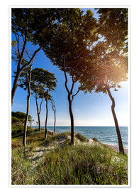 Poster Premium Tall Trees at the Baltic Sea