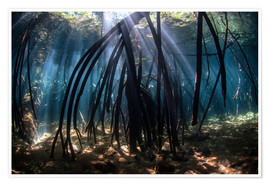 Poster Premium  Beams of sunlight in a mangrove forest - Ethan Daniels