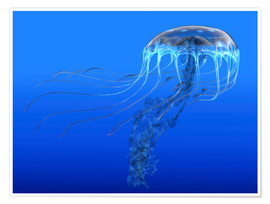 Poster  A blue spotted jellyfish illustration. - Corey Ford