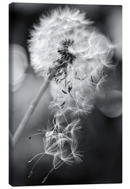 Tela  Dandelion lost his seeds - Julia Delgado