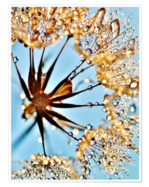 Poster Dandelion thousands drops