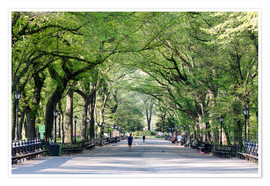 Poster Premium  The Mall in spring, Central park, New York city, USA - Matteo Colombo