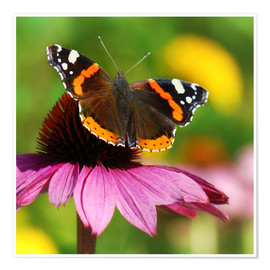 Poster Premium Butterfly