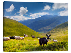 Stampa su tela  Herd of sheep and goats in the mountains