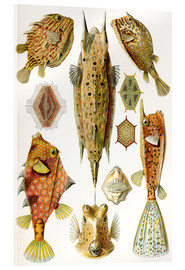Stampa su vetro acrilico  Ostraciontes cowfish species - Ernst Haeckel