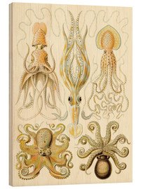 Stampa su legno  Squid and octopi - Ernst Haeckel