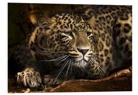Forex  Leopard on the lookout - Edith Albuschat