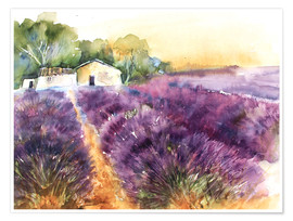 Poster Premium  Lavender field in Provence - Eckard Funck
