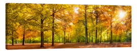Tela  Colorful autumn forest in sunlight - Jan Christopher Becke