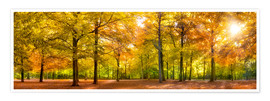 Jan Christopher Becke - Colorful autumn forest in sunlight