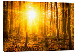 Stampa su tela  Autumn forest in the backlight - Jan Christopher Becke