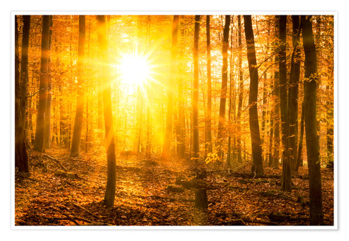 Poster Premium Autumn forest in the backlight