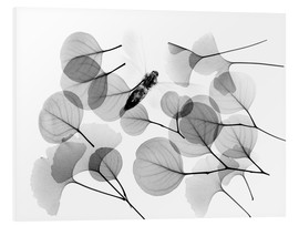 Stampa su PVC  Ginkgo and bee