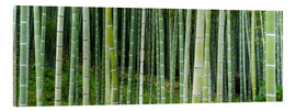 Stampa su vetro acrilico  Green bamboo forest in Kyoto, Japan - Jan Christopher Becke