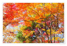 Poster Premium Colorful autumn leaves in the forest