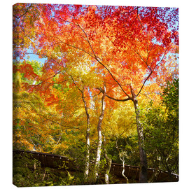 Stampa su tela  Bright colors in the autumn forest - Jan Christopher Becke