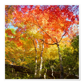 Poster Premium Bright colors in the autumn forest