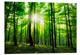 Forex  Sunlight in the green forest, spring time