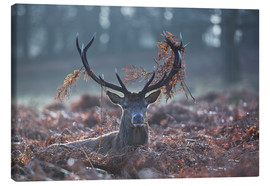 Tela  Deer stag in the brushwood - Alex Saberi
